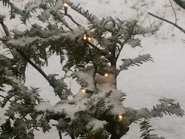 Snow and Twinkling Lights